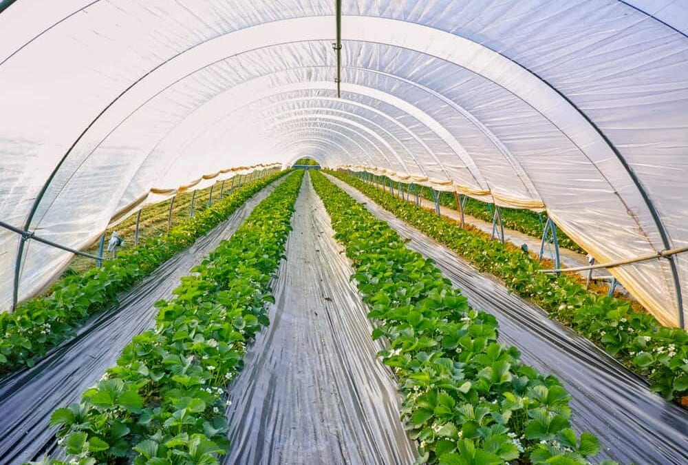 Pros and Cons of Polyethylene Greenhouse Coverings